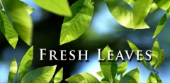 Fresh Leaves Live Wallpaper v1.7
