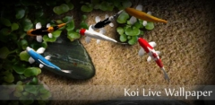 Koi Live Wallpaper v1.5
